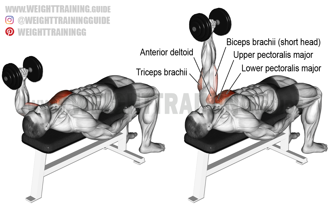 bench press exercise instructions