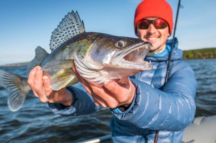 Stardew how to catch walleye